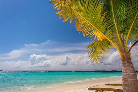 loungers: Small coconut palm tree near to sun loungers at dreamy tropical beach in Maldives in front of Indian ocean Stock Photo
