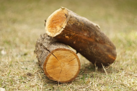 Chopped wood. Two pieces outdoors photo