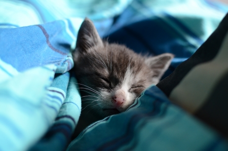 Cute kitten sleeps in bed in the afternoon photo