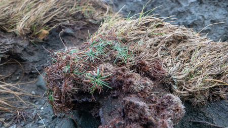 Plants growing on rough rocks by the sea in the western part of Norway.