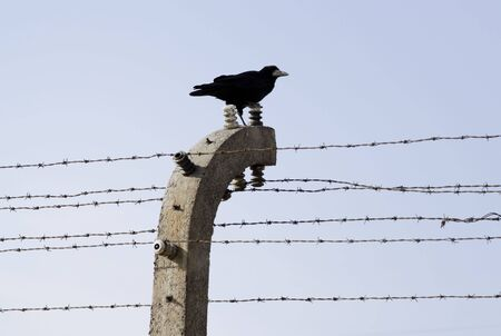 A crow sitting on external line of barbed-wire fences Stock Photo - 7986060