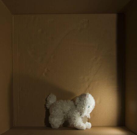 cat toy: juguete gato blanco aislado en caja de cart�n con luz lateral
