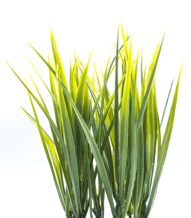clump: clump of green plastic grass isolated on white background Stock Photo
