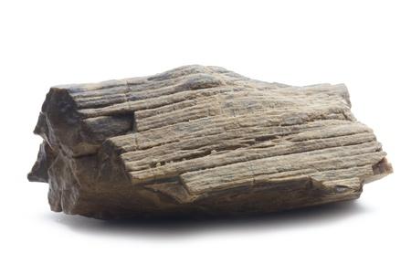 piece of fossilized wood isolated on white background photo