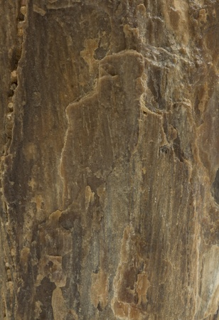 fossilized: brown stone textured fossilized wood full-frame background Stock Photo