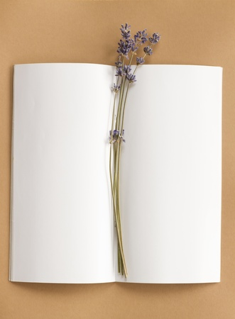 flower bunch: blank open notepad with flower bunch laying on sepia background