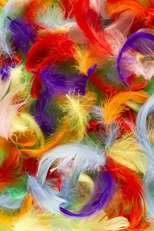 softness: multicolor full frame softness texture feathers wallpaper