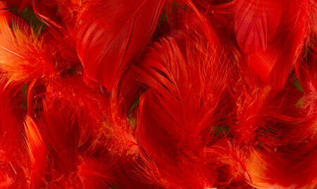 softness: red full frame softness texture feathers wallpaper