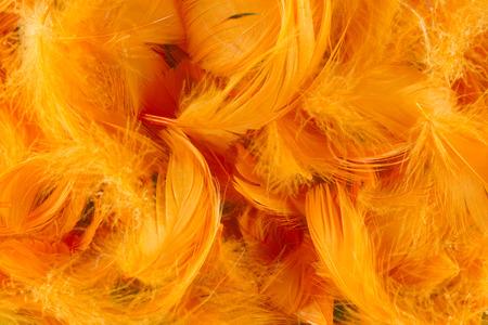softness: orange full frame softness texture feathers wallpaper Stock Photo