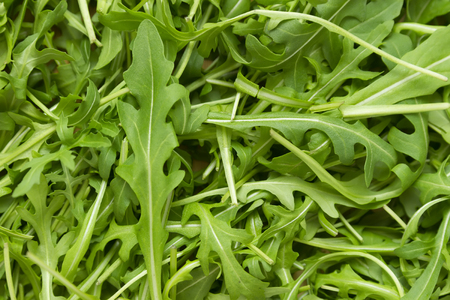 edible leaves: full frame wallpaper of rucola leaves in top view