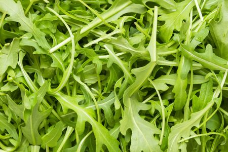 roquette: full frame wallpaper of rucola leaves in top view
