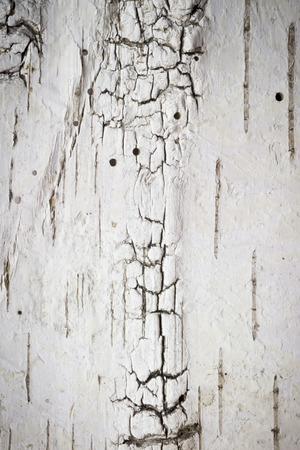 Full Frame Wallpaper Of Birch Bark With Scar And Woodworm Hole Stock ...