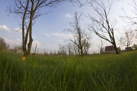 low angle views: vista de ojo de pescado en la primavera de la hierba verde y un �rbol en el patio rural