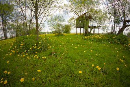 landscape of rural dandelion meadow with tree house, fisheye lens distortion