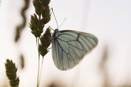 blade of grass: white butterfly sitting on blade grass during sunset