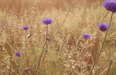 meadow  grass: low angle wallpaper of dry meadow grass and flower
