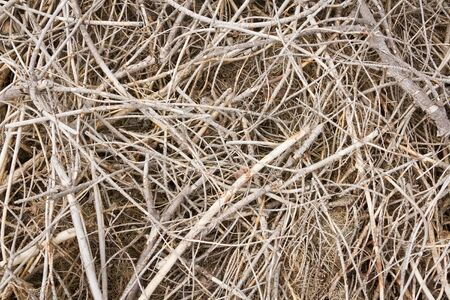 brushwood: top view background of texture of brushwood in mess