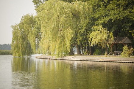 weeping willow: view from lake at lakeside promenade with weeping willow tree Stock Photo