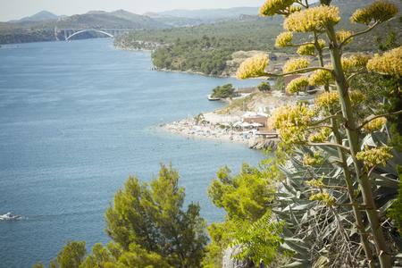 sea seaport: Seaport on the Adratic sea - Croatia, Sibenik with agave flower