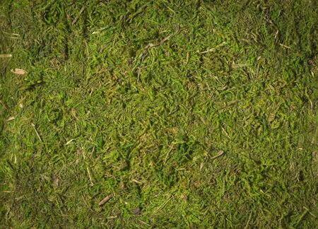 grundge: top view of textured green mass background