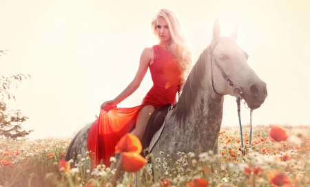 horses in field: Beautiful young sexy woman riding a horse  on a poppy field, wearing fashionable red dress.