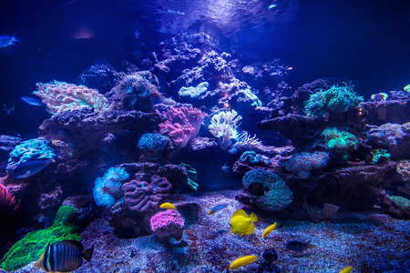 reefscape: Photo of amazing coral and fishes.