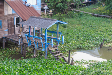 water hyacinth: Wooden gazebo in the river with water hyacinth
