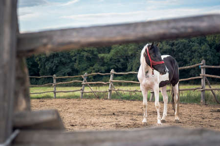 domestic: domestic horse on a farm