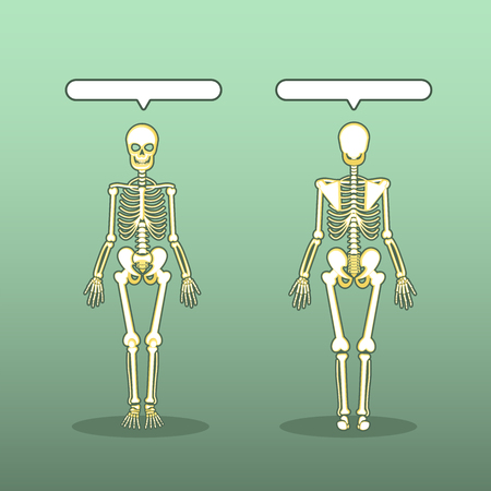 Human Anatomical Skeleton Vector Set