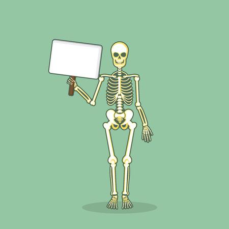 Human Anatomical Skeleton Vector Set