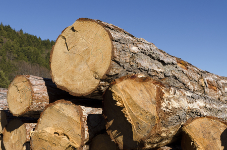 trespasser: Stack of coniferous timber in the Rhodope Mountain Stock Photo
