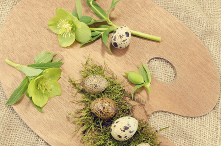 resurrect: Easter palette with quail eggs and hellebore close up Stock Photo