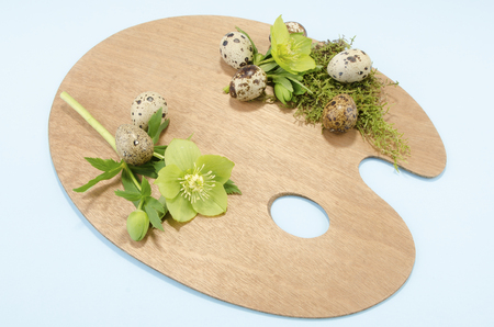 resurrect: Easter palette decoration with boiled quail eggs and hellebore on a blue background