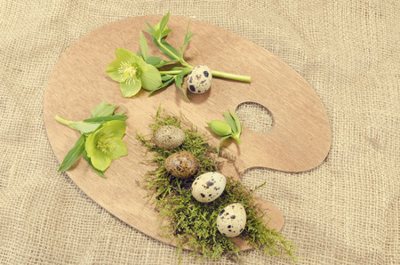 resurrect: Easter palette decoration with quail eggs and hellebore Stock Photo