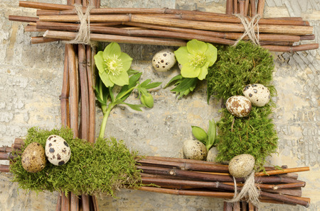 resurrect: Easter frame with vintage background and seven boiled quail eggs plus two hellebore flowers Stock Photo