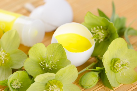 resurrect: Easter decoration with yellow paint in a egg shell and hellebore. Selective focus