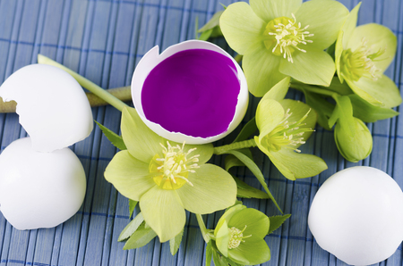 resurrect: Easter decoration with hellebore and egg shell with magenta tempera paint. Selective focus