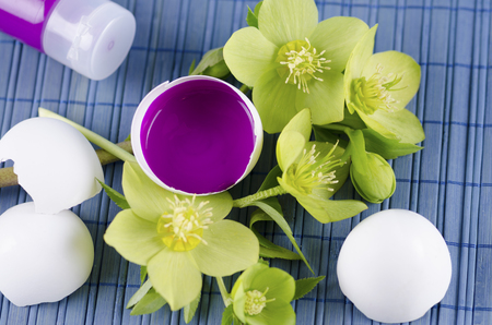 resurrect: Colorful Easter decoration with egg shell filled with magenta tempera paint and hellebore. Selective focus