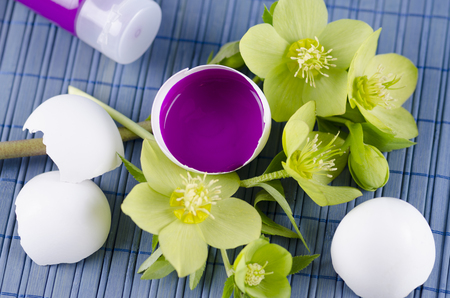 resurrect: Colorful decoration for Easter with hellebore and egg shell with magenta tempera paint. Selective focus