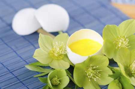resurrect: Easter decoration with egg shell helebore flower and pollen. Selective focus