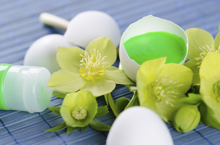 paint tube: Green tempera paint tube and hellebore and egg shells in a Easter decoration. Selective focus Stock Photo