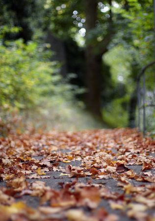autumn way in a park Stock Photo - 7399575