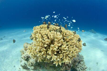 慶良間沖縄 写真素材