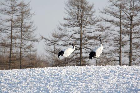 living thing: Crane