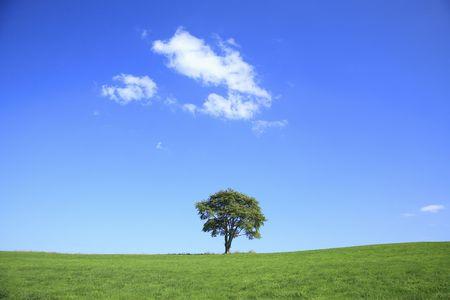 bluesky: Tree