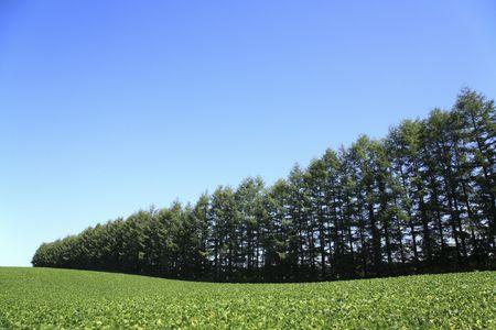 bluesky: Windbreak forest