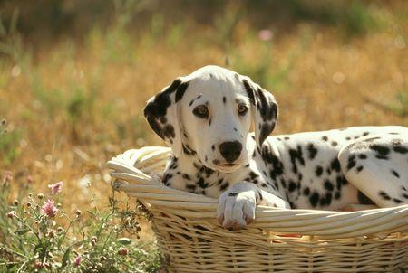 dog: 개