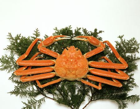 Snow crab photo
