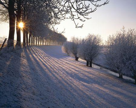 snowy landscape: Snowy landscape