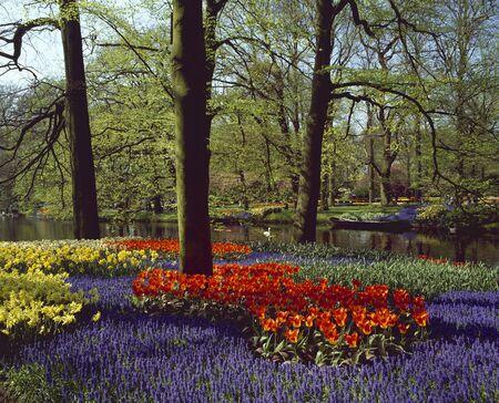 colorfulness: Flower garden Stock Photo